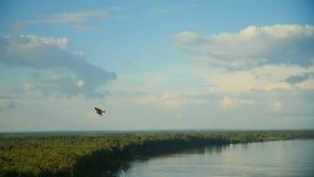 Eagle volant dans le ciel banque de vidéos