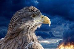 Eagle vor dem hintergrund eines drastischen Sturmhimmels Lizenzfreie Stockfotografie