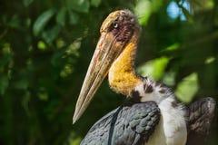 Eagle w Bali wyspie Indonezja Zdjęcie Royalty Free