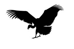Eagle on a white. Black silhouette of eagle on a white background stock illustration