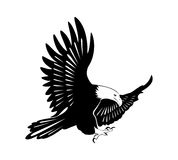 An eagle with wings open. Illustration of an eagle flying Stock Photography