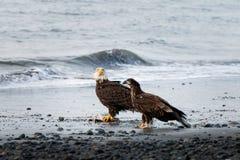 Eagle y descendiente foto de archivo libre de regalías