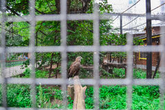 The eagle in the zoo. The bird of prey in the zoo. Eagle in a cage. Eagle behind bars. Lattice zoo with a large eagle Stock Photo