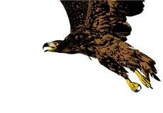eagle1 ελεύθερη απεικόνιση δικαιώματος