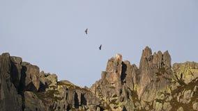 Eagles над пиками Стоковое Изображение RF