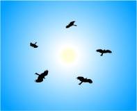 Eagles Lizenzfreies Stockfoto