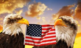 Eagles calvo tiene nel becco della bandiera degli Stati Uniti fotografia stock