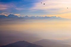 Fliegenadler Stockbilder