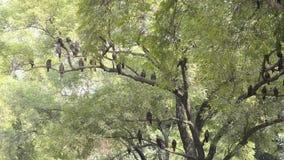 Eagles, das an einem sonnigen Tag an Nainital-Zoo in Neu-Delhi, Indien stillsteht stock video footage