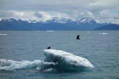 Eagles, das von einem Eisberg im Ozean sich entfernt Stockfotos