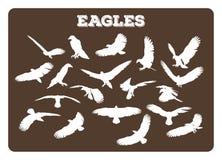 Eagles in den verschiedenen Haltungen Stockbild