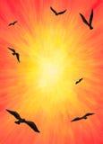 Eagles die in het Licht vliegen (2014) stock illustratie