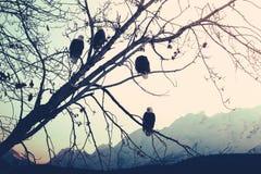 Eagles en la puesta del sol Fotos de archivo libres de regalías