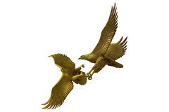 Eagles fighting on white background Stock Images