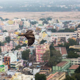 Eagles über der Stadt Lizenzfreie Stockfotografie