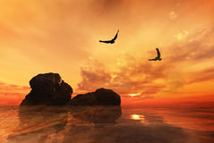 Eagles flying. Over rocks with a beautiful sunset Stock Photos