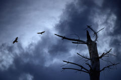Eagles flying against a dramatic sky Stock Photo