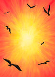 Eagles Flying into the Light (2014). An abstract illustration of a group of eagles flying towards the sunlight through the orange sky, the blurring is intended Stock Photography