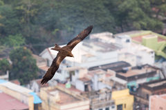 Eagles over the city Royalty Free Stock Images