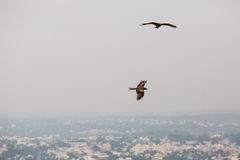Eagles over the city Stock Photo