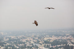 Eagles over the city Royalty Free Stock Image