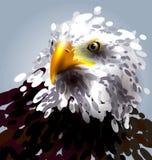 Eagles head Royalty Free Stock Photo