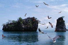 Eagles-het vliegen Stock Foto