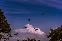 Eagles hunting under a blue sky with some clouds stock image