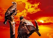 Eagles im Himmel Lizenzfreie Stockfotos