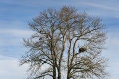 Eagles-Nest Lizenzfreies Stockfoto