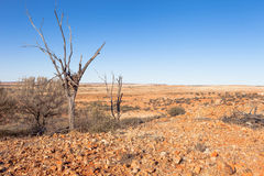 Eagles nest in the Australian outback. Royalty Free Stock Images