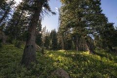 Eagles Nest Wilderness, Colorado Stock Images