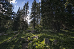Eagles-Nest-Wildnis, Colorado Stockfoto