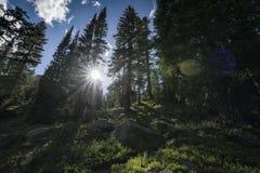 Eagles-Nest-Wildnis, Colorado Lizenzfreies Stockbild
