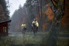 Eagles op paarden in de regen, Roztocze, Polen Royalty-vrije Stock Foto
