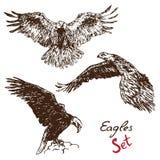 Eagles-Satz, mit Aufschrift, Hand gezeichnetes Gekritzel lizenzfreie abbildung