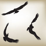 Eagles Silouwete vektor illustrationer