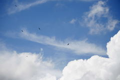 Eagles in the sky. Six eagles in the cloudy blue sky royalty free stock image