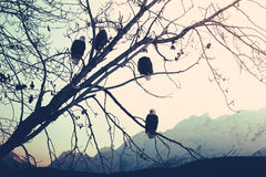 Eagles at Sunset Royalty Free Stock Photos