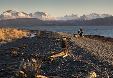 Eagles sur une plage d'Alaska photo stock