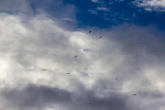Eagles under clouds Stock Photo