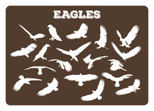 Eagles In Various Poses Stock Image