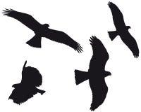 Eagles (vecteur) Images stock