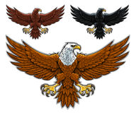 Eagles Stock Images