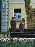 Eagles w mieście Obraz Stock