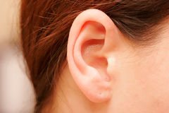 Ear. Color closeup picture of brunette girl ear Royalty Free Stock Photo