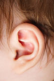 Ear royalty free stock image