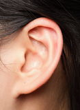 Ear. Close up view of a human ear Royalty Free Stock Photos