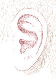 Ear Stock Images