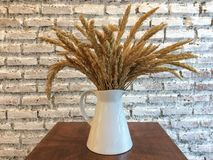 Ear of barley in a jug. Ear of barley in a white ceramic jug. (decoration Stock Photos
